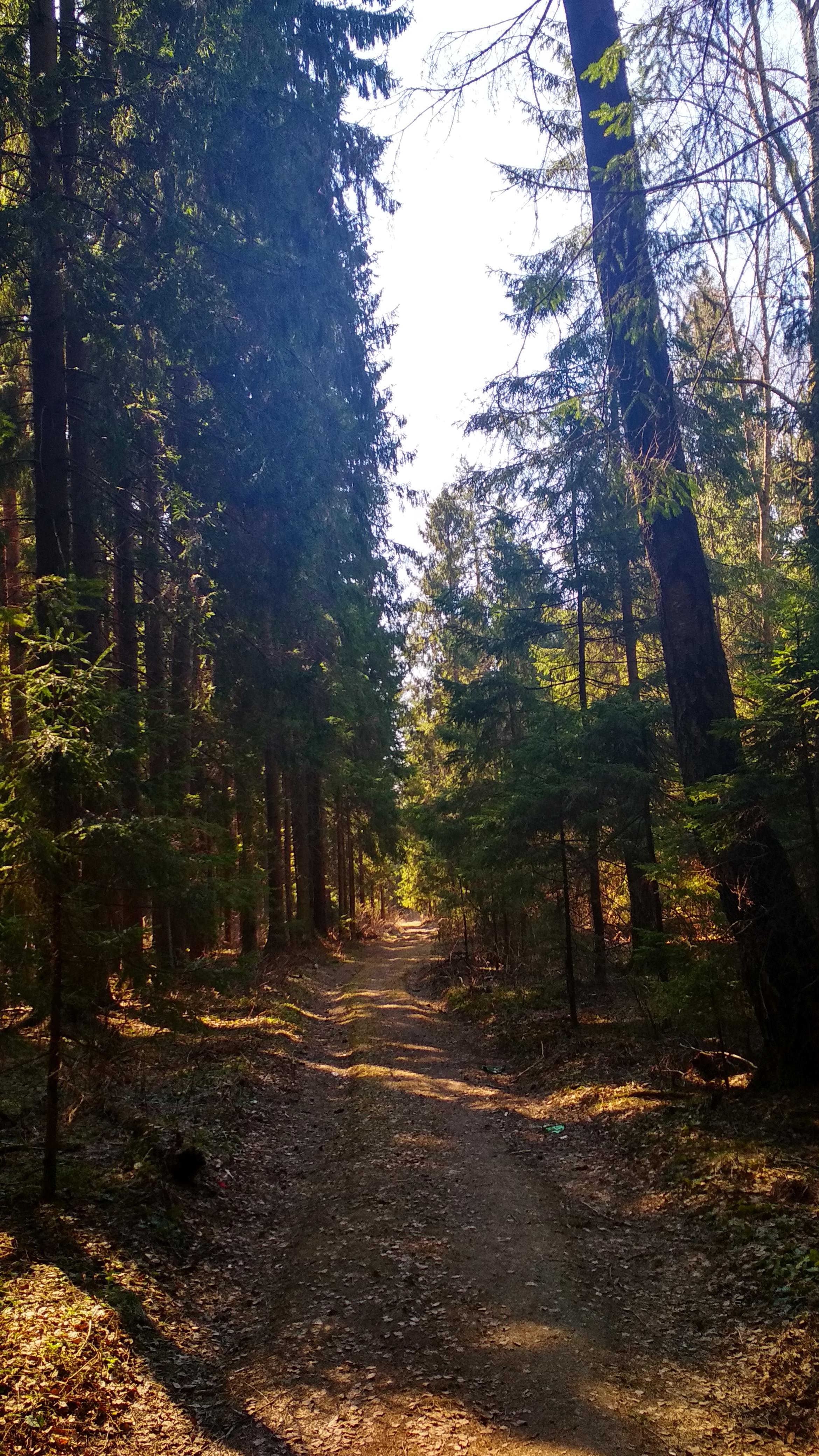 спасите лес от КОАП 8.7
