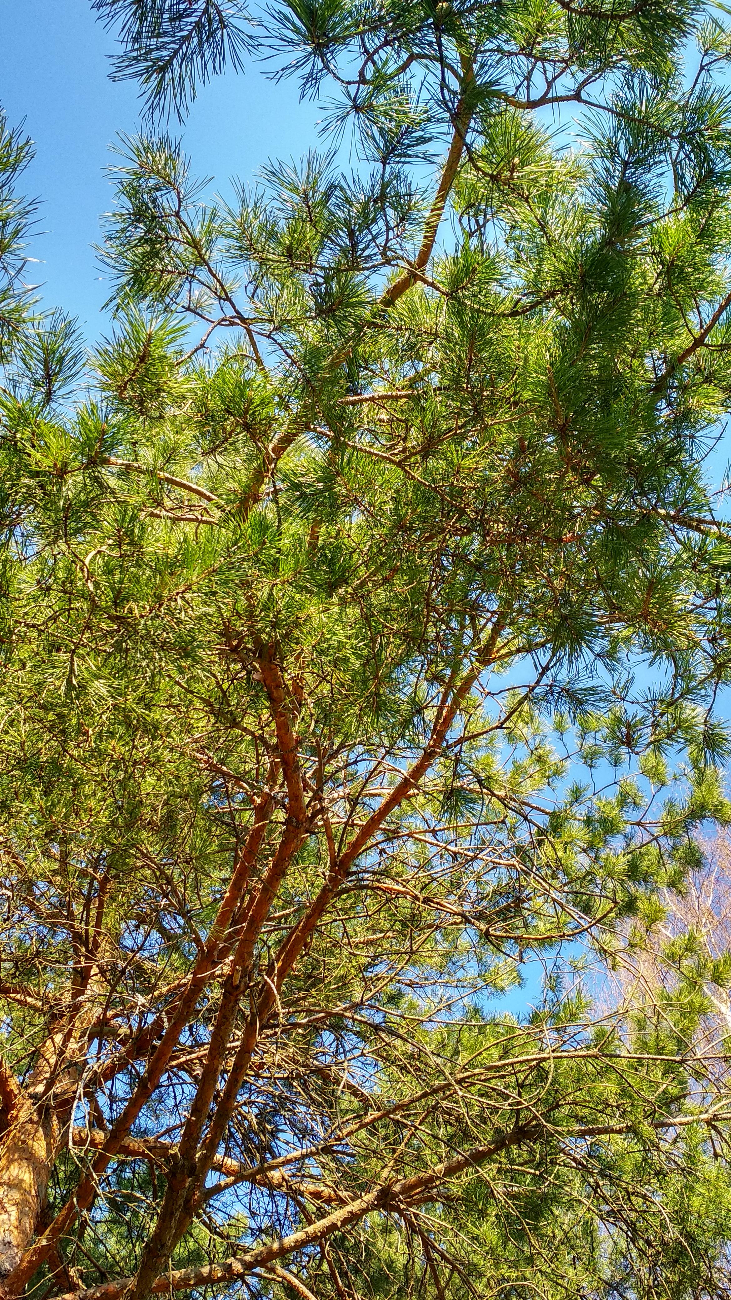 Дайте расти лесу на земле сельхоз назначения